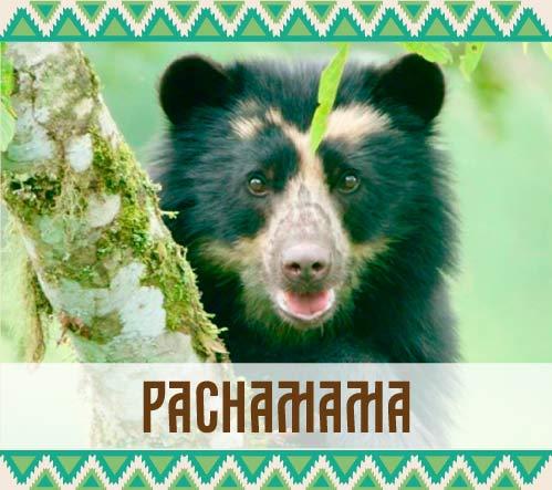 Ver publicaciones de la categoría Pachamama